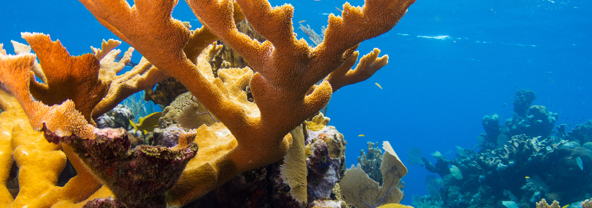 coral-and-diver